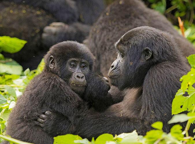 Bwindi Impenetrable National Park14