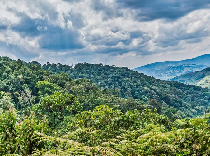 Bwindi National Park1