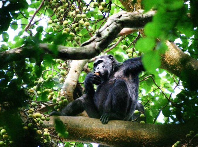 Kibale National Park12