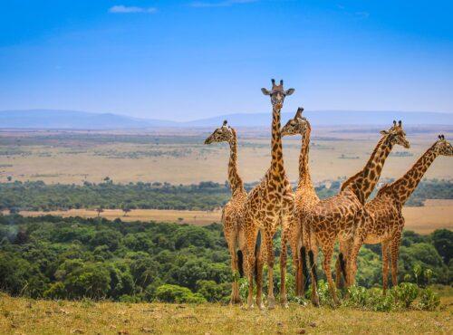 Masai Mara12