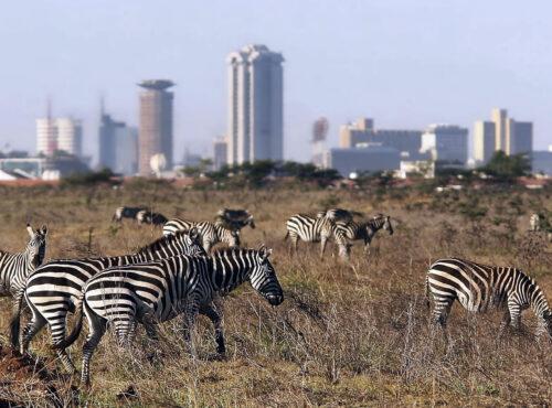 Nairobi National Park 1