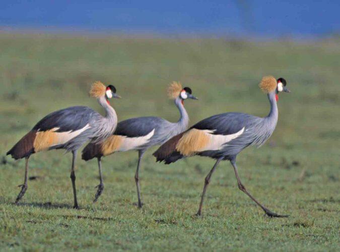 Nairobi National Park 2