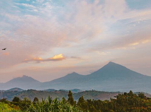 Rwanda- Volcanoes National Park