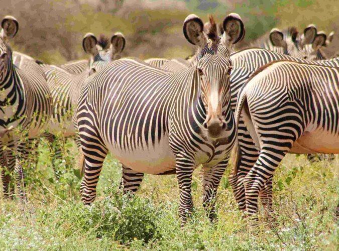 Samburu National Reserve2