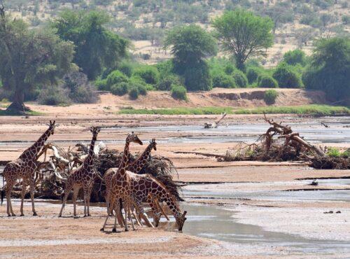 Shaba National Reserve1