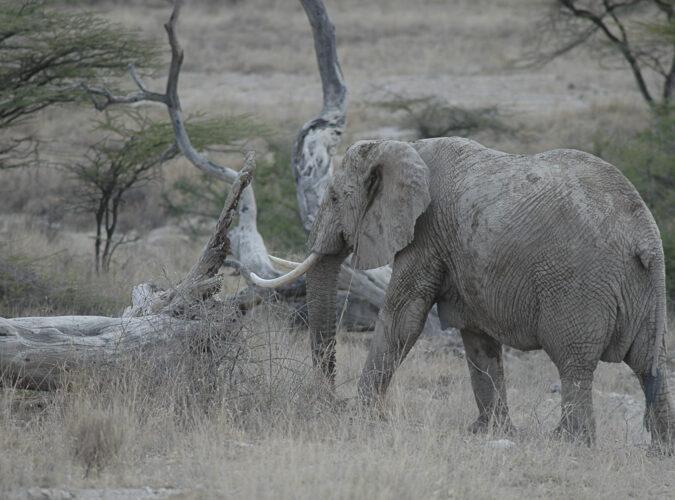 Shaba National Reserve2