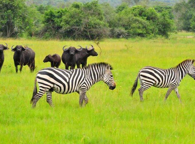 Uganda Wildlife1