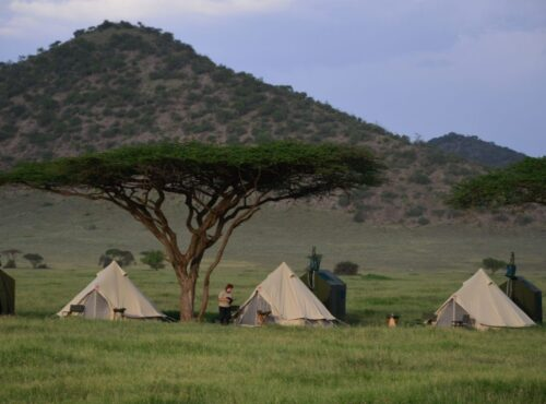 flying camp natron