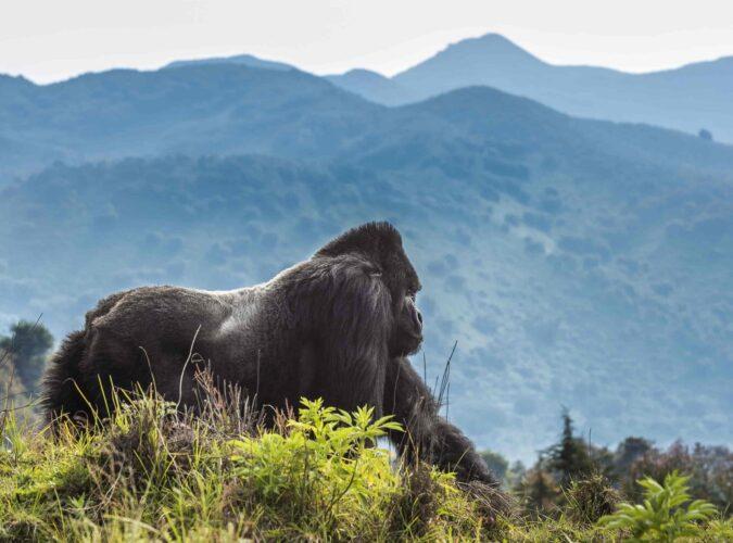 volcanoes-Park-Rwanda1